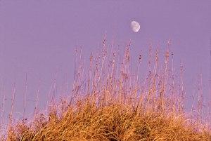 Moon-Grass