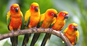 Exotic-Birds-1-505x270