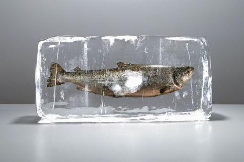 frozen-fish.jpg