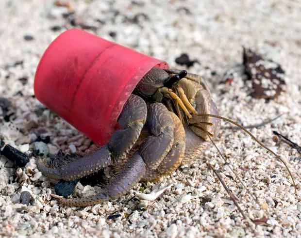 hermit-crab_2086578i 2.jpg