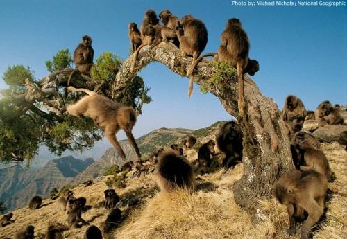 monkeys-3.jpg